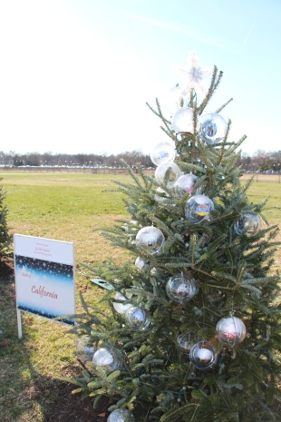 The California Christmas Tree in Washington D.C. with ornaments from Lux Art Institute